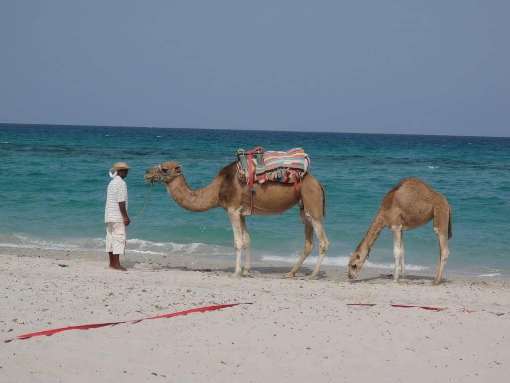 Velbloudi na pláži v Mahdii